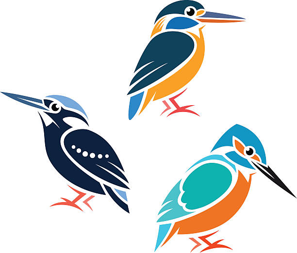 Stylized Birds Stylized Kingfishers - Common Kingfisher, Silvery Kingfisher, Blue-Banded Kingfisher kingfisher stock illustrations