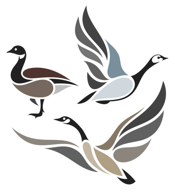 Stylized Birds - Wild Geese Wild Geese in flight canada goose stock illustrations