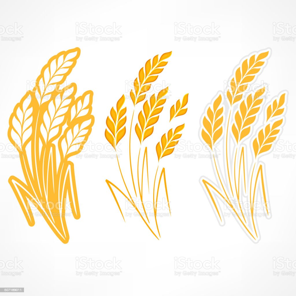 Stylized ears of wheat vector art illustration