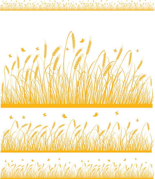 Weizen – Vektorgrafik