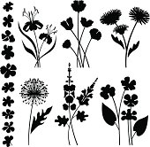 Variable garden flowers and flower heads.