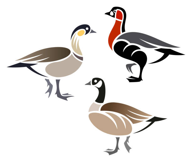 Stylized Geese Stylized Geese - Cackling Goose, Hawaiian Goose, Red-breasted Goose goose bird stock illustrations