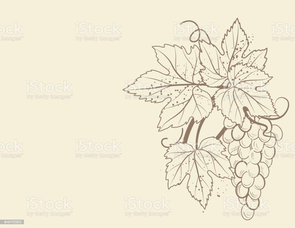 Stilisierte Grapevine Rahmen Mit Trauben Blätter Und Reben Stock ...