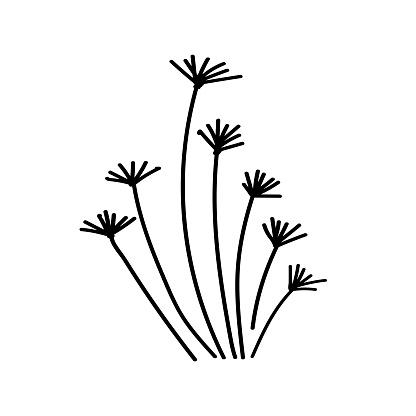 stylized grass. grass. doodle grass. grass ink. herb logo. handwritten vector stylized bush isolated. Doodle vector grass, herb, green-fodder illustration , bush, shrub,simple