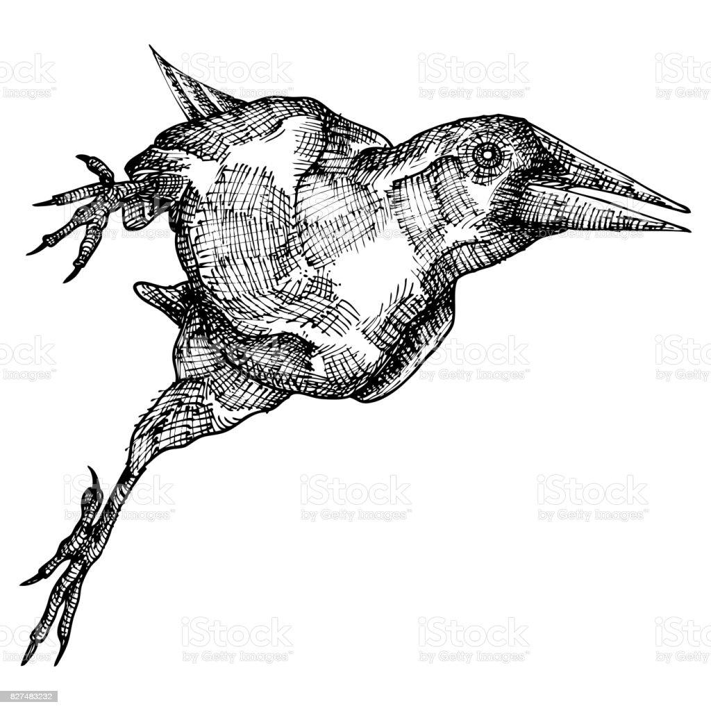 Stilisierte Hand Zeichnung Krähe Dekorative Vogel Hand Gezeichnete ...