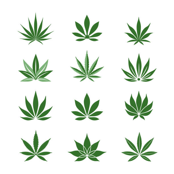 Stylized Hemp leaves Cannabis, Marijuana leaf icons set. Simple, classy Hemp leaves isolated on white background. Can be used as logo for a cannabis farm, medical products and health concept. Vector illustration. marijuana stock illustrations