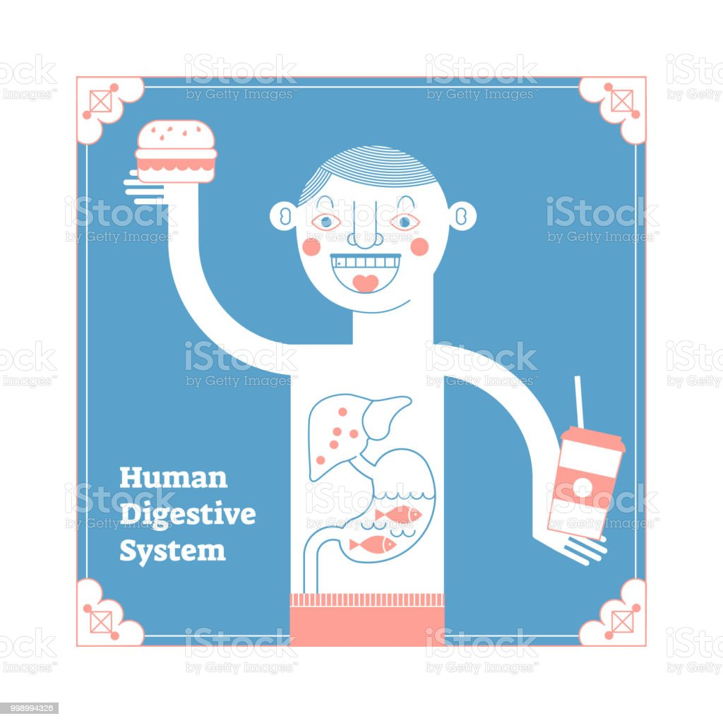Stylized Human Digestive System Modern Anatomical Vector ...