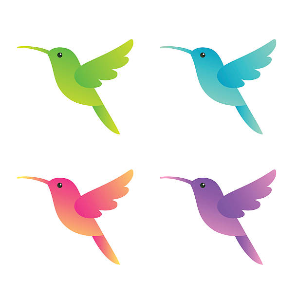 stylized hummingbirds set - hummingbird stock illustrations