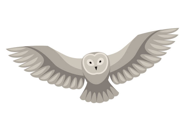 Owls clipart flying, Picture #3038849 owls clipart flying