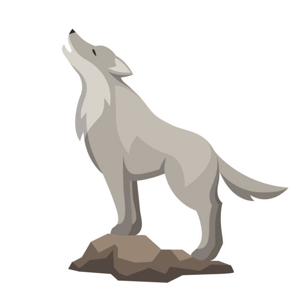 Stylized illustration of wolf. Woodland forest animal on white background Stylized illustration of wolf. Woodland forest animal on white background. silhouette of a howling coyote stock illustrations
