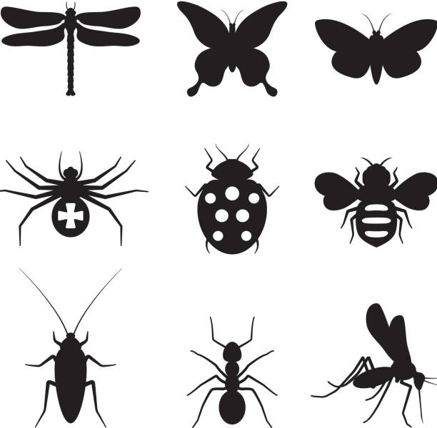 Stylized insects black and white royalty free vector icon set Stylized insects black and white icon set queen bee stock illustrations