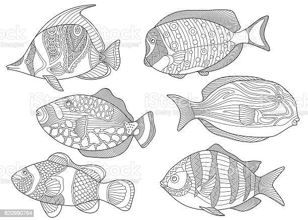 Free triggerfish Images, Pictures, and Royalty-Free Stock