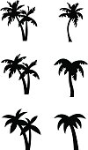 Stylized palm tree silhouettes