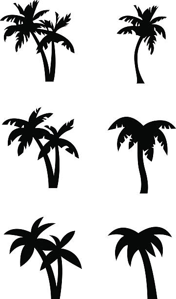 Stylized palm tree silhouettes Set of stylized palm tree silhouettes in three different states of simplification / abstraction. Illustrations are in black on white background ready to use for logos, emblems and similar applications. beach clipart stock illustrations
