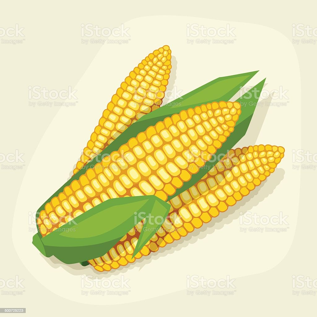 Stylized vector illustration of fresh ripe corn cobs. vector art illustration