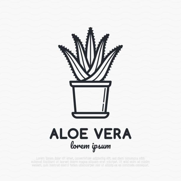 Succulent Aloe vera in pot. Thin line icon. Modern vector illustration of houseplant. vector art illustration