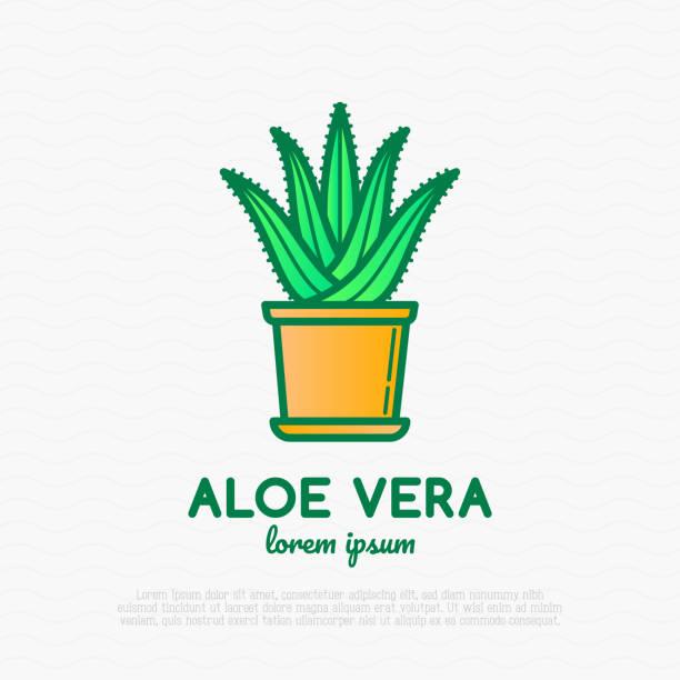 succulent aloe vera in pot. thin line icon. modern vector illustration of houseplant. - aloe vera stock illustrations