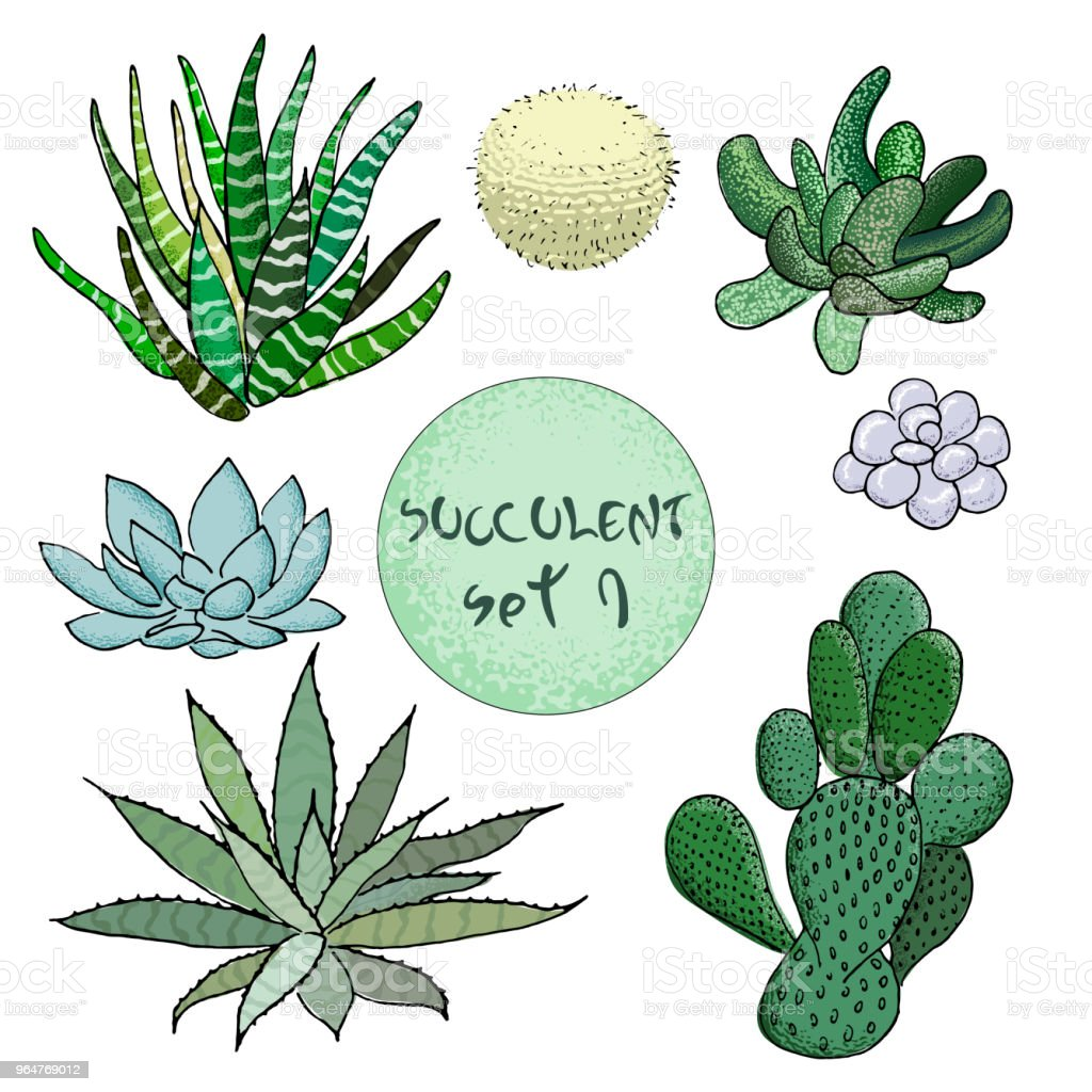 Succulent cactus collection. agave, aloe, gastraea, haworthia, echeveria, Pachyphytum, prickly pear, royalty-free succulent cactus collection agave aloe gastraea haworthia echeveria pachyphytum prickly pear stock vector art & more images of agave