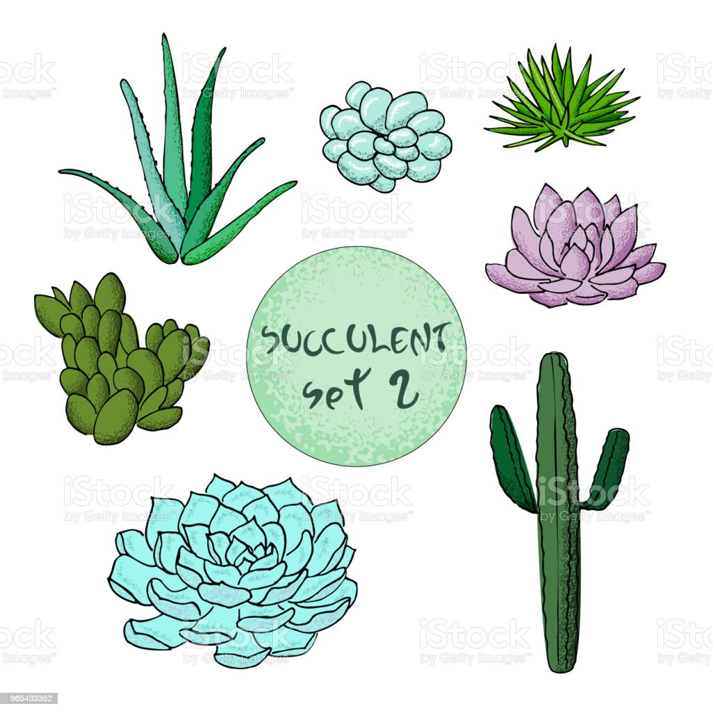 Succulent cactus collection. agave, Carnegiea, aloe, gastraea, haworthia, Saguaro, Echinopsis, San Pedro, Cereus royalty-free succulent cactus collection agave carnegiea aloe gastraea haworthia saguaro echinopsis san pedro cereus stock vector art & more images of agave