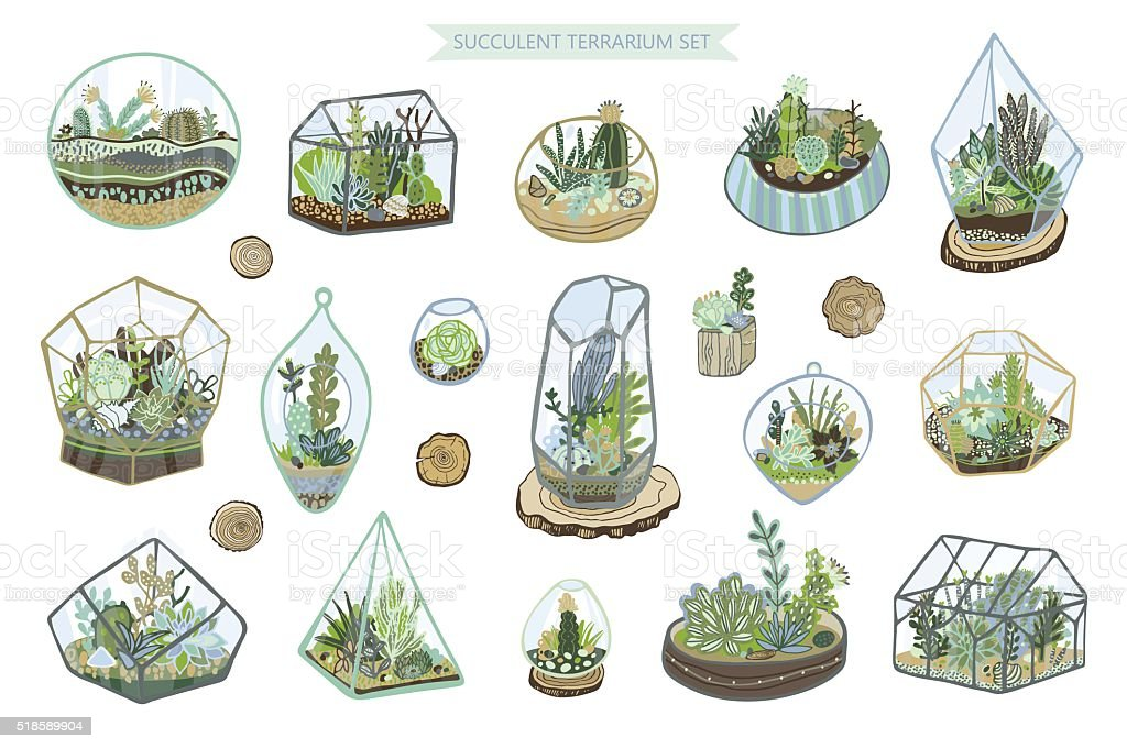 Succulent Cactus Terrarium Vector Color Hand Drawing Set Stock Illustration Download Image Now Istock