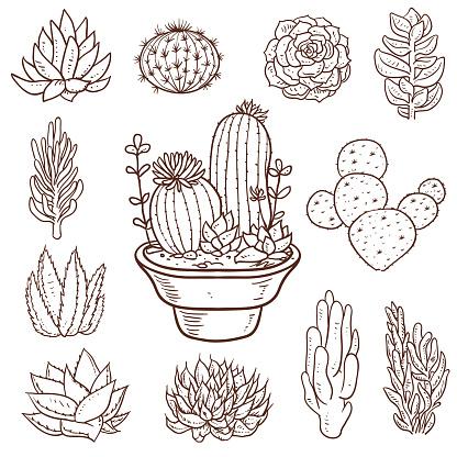 Succulent Doodle Plants