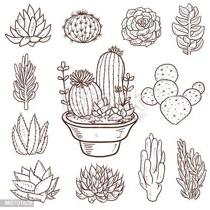 Vector illustration of a beautiful set of Succulent Doodle Plants