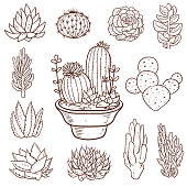 Vector illustration of a beautiful set of Succulent Doodle Plants