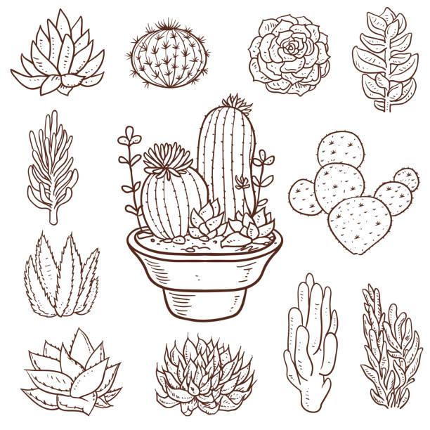 Succulent Doodle Plants vector art illustration