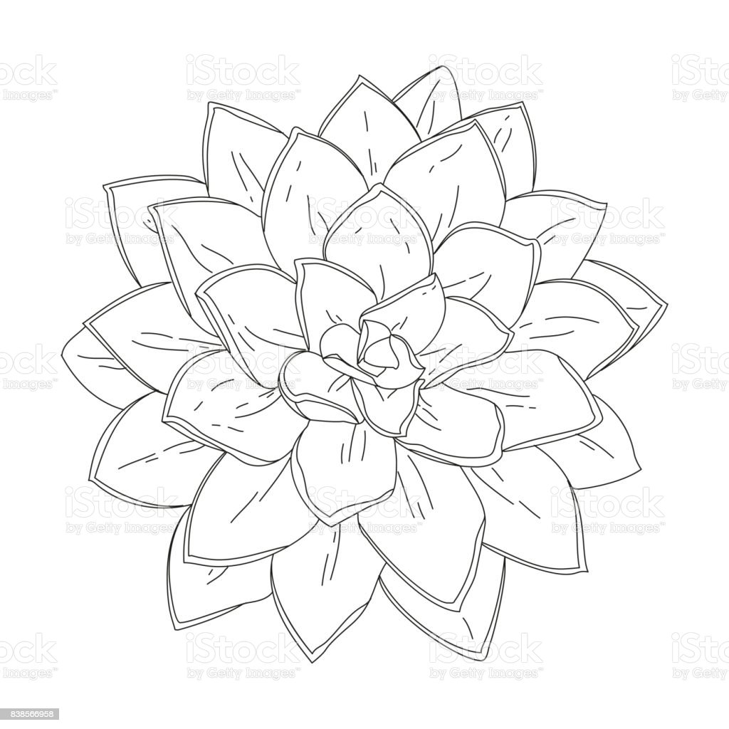 Succulent doodle vector illustration vector art illustration
