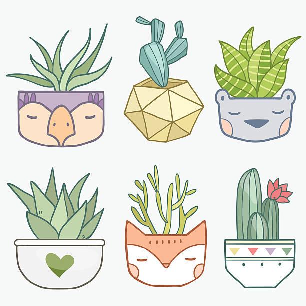 succulent flowers vector art illustration