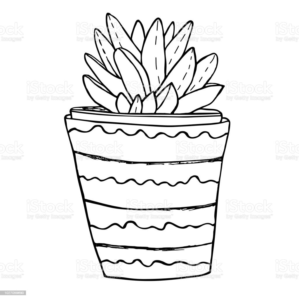 Succulent in a ceramic flower pot hand drawn sketch coloring book page illustration
