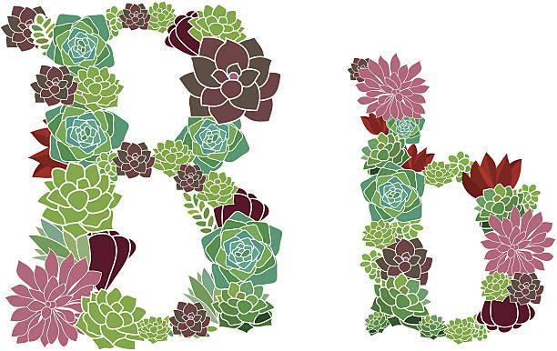 Succulent letter B and b vector art illustration