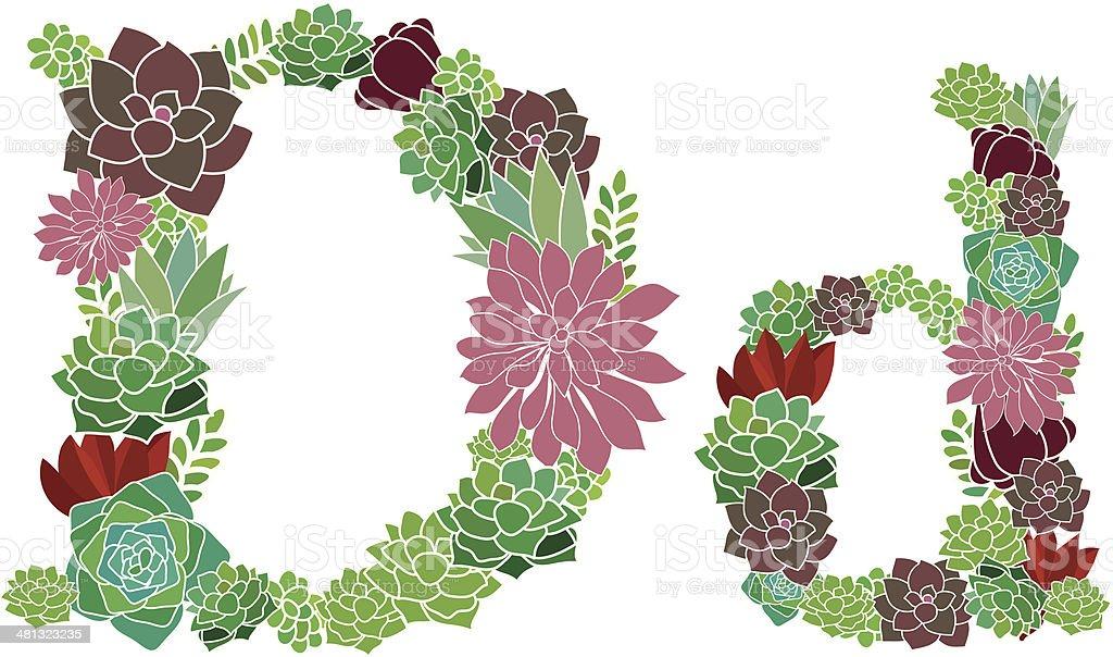Succulent letter D and d vector art illustration