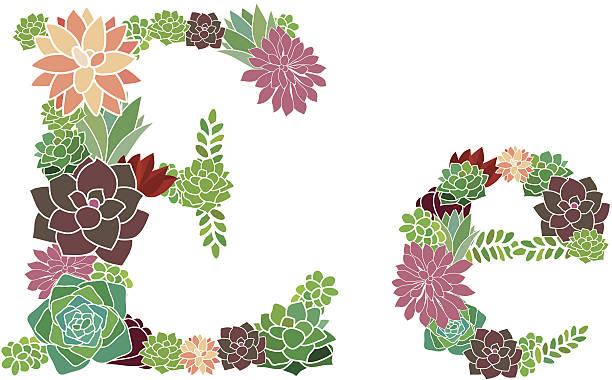 Succulent letter E and e vector art illustration