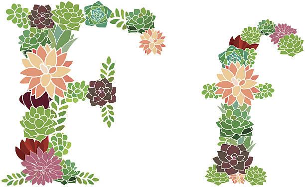 Succulent letter F and f vector art illustration