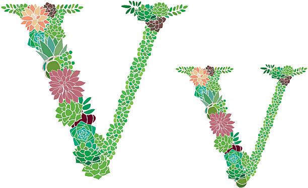 Succulent letter V and v vector art illustration