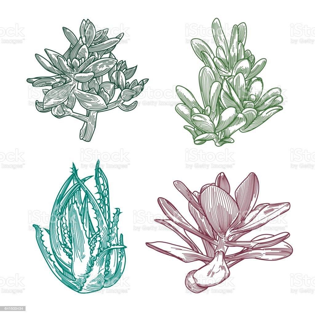 Succulent Line Art Set vector art illustration