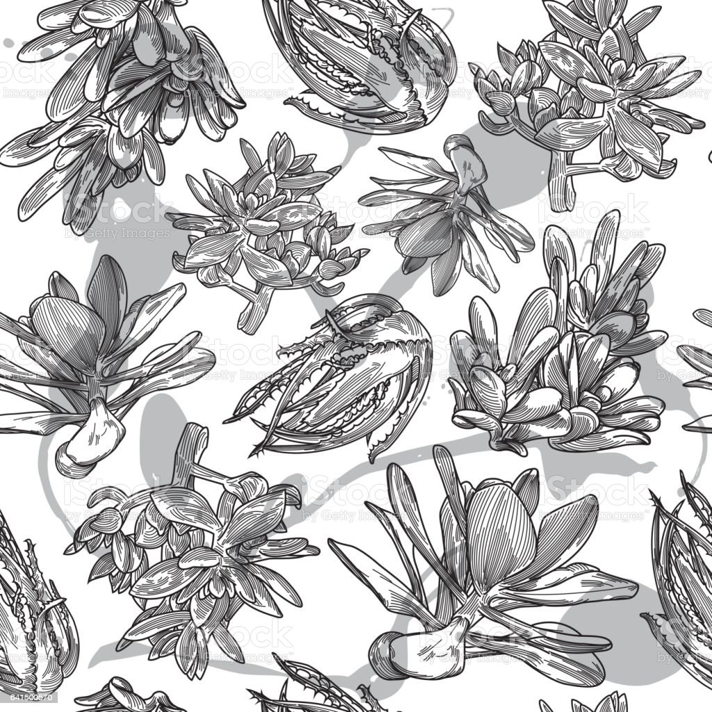 Succulent Pattern vector art illustration