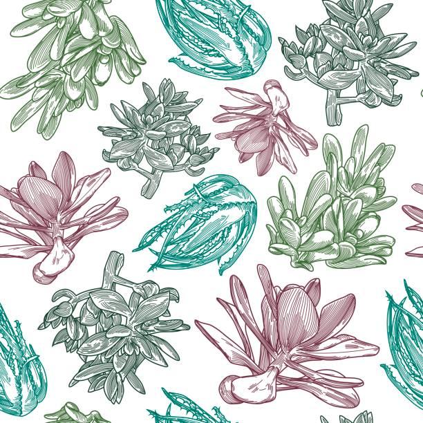 Succulent Pattern vector art illustration