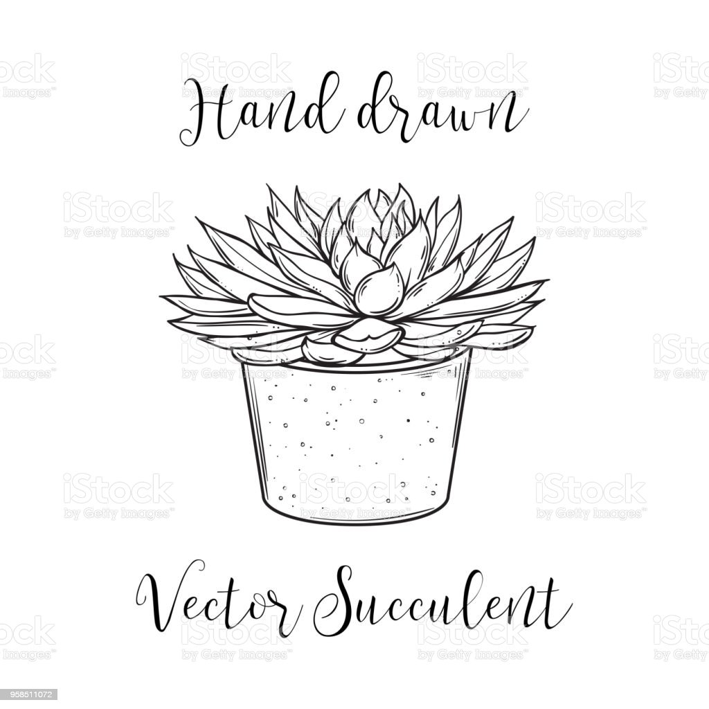 Succulent Plant In A Concrete Flower Pot Hand Drawn Black And White