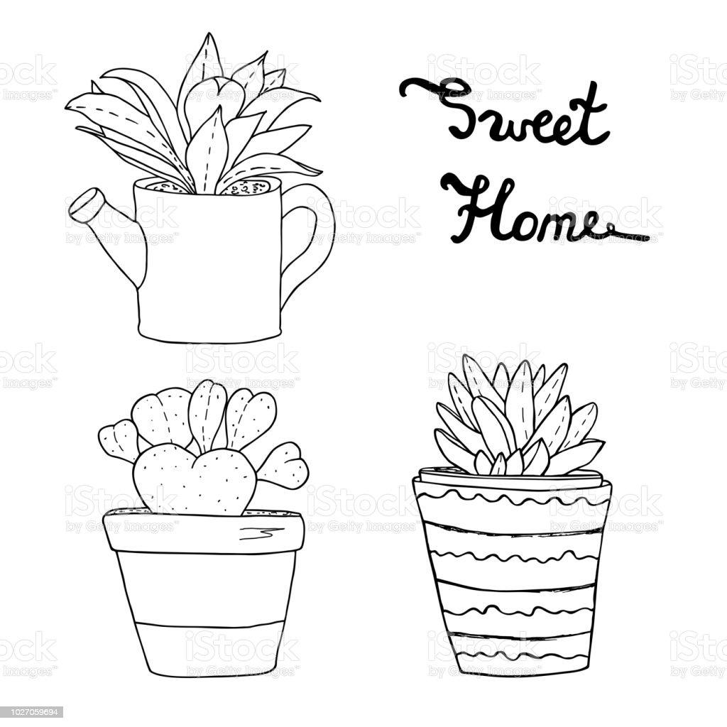 Succulents Kaktusler Bitki Saksi Icinde Cesitli Ev Cicek