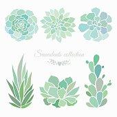 set of six different succulents