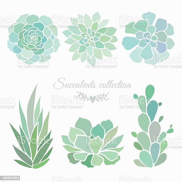 Succulents collection vector id465832304?b=1&k=6&m=465832304&s=612x612&h=4ybohrdzkwopwbjsgympt1ek6mqtinzscvoamkcd9qm=