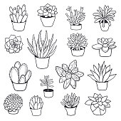 Hand-drawn contour of succulents  and other houseplants. Vector drawing set.