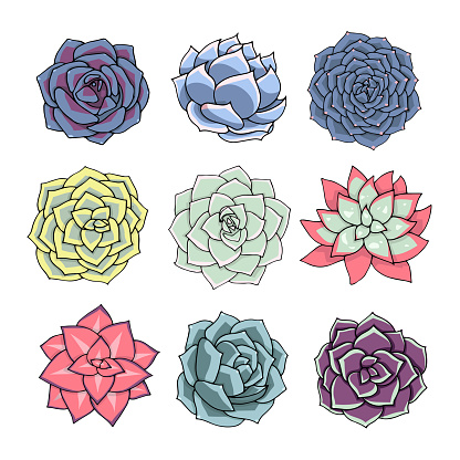Succulents isolated on white background. Vector illustration. Multicolored plants set for graphics. Doodle art design. Flowers top view.