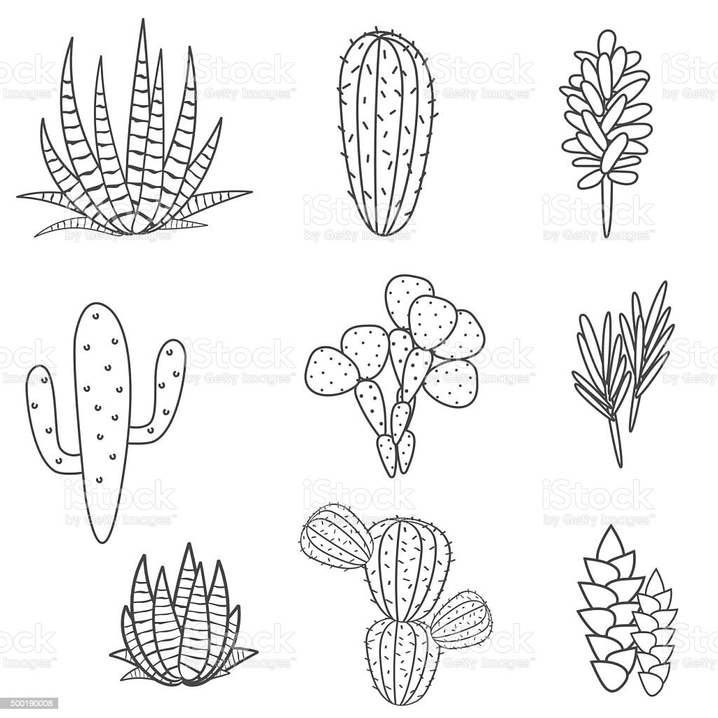 Succulents Plant Vector Set Botanical Black And White ...