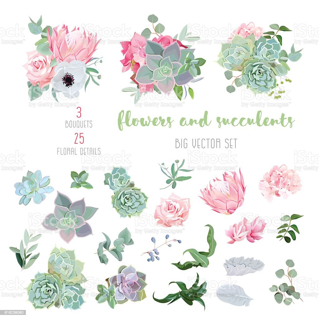 Succulents, protea, rose, anemone, echeveria, hydrangea big vector collection royalty-free succulents protea rose anemone echeveria hydrangea big vector collection stock vector art & more images of agave