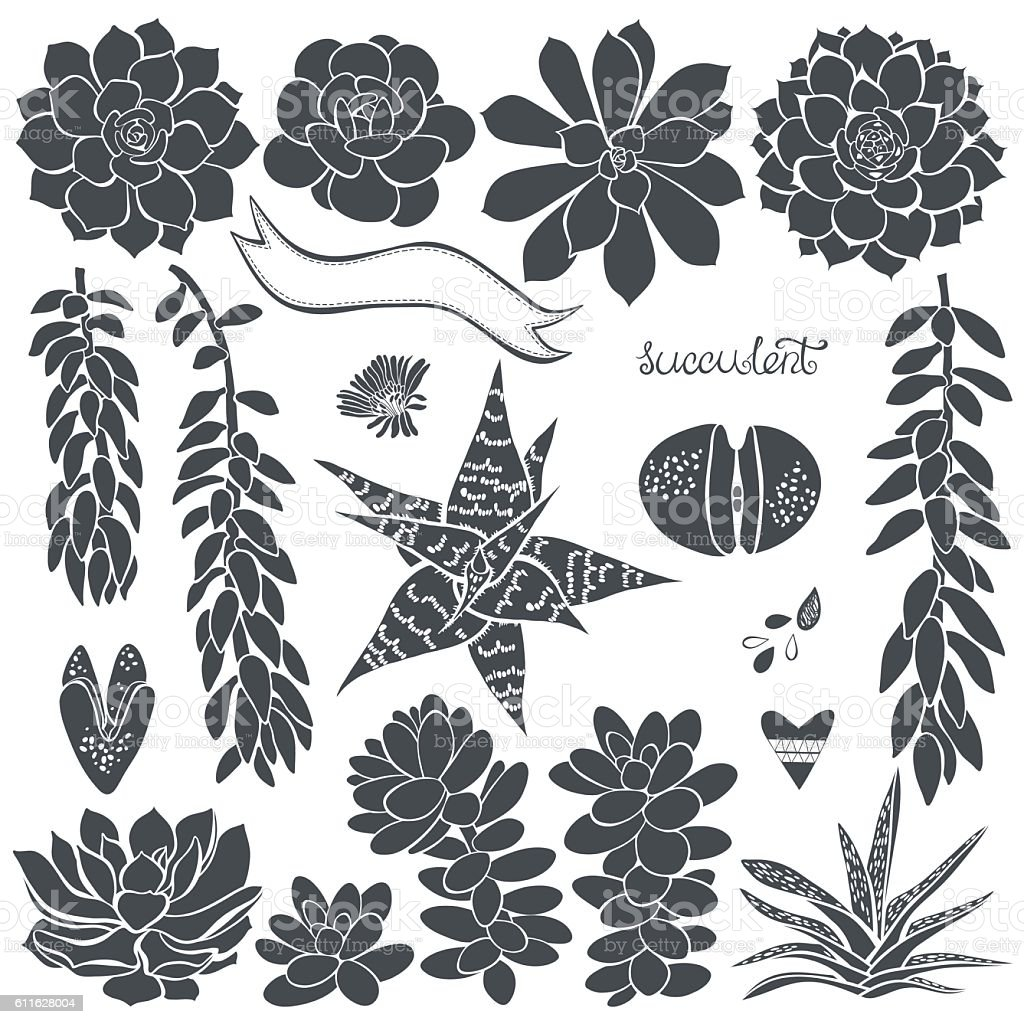 Succulents. Vector set of  different silhouettes  succulents . vector art illustration