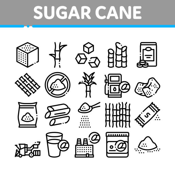 Sugar Cane Agriculture Collection Icons Set Vector vector art illustration