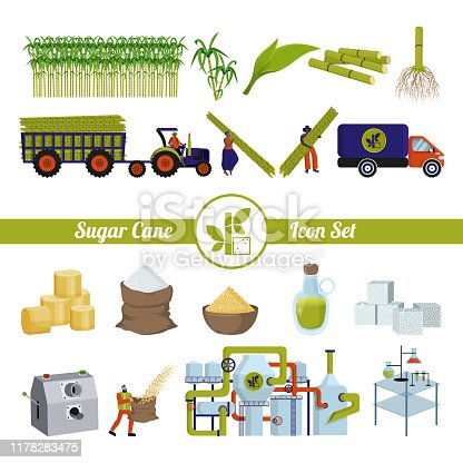 Sugar cane and products from it. Production and processing. Plant, factory, workers. Equipment. A set of isolated objects on a white background. Flat vector
